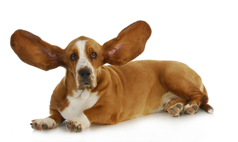 http://www.dreamstime.com/royalty-free-stock-photography-dog-listening-image29305147